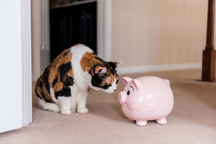 Cat sniffing piggy bank