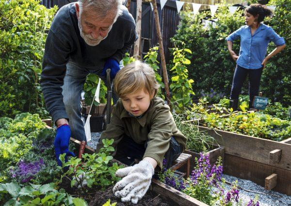 Grandparent gardening with grandchild